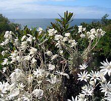 So Many Flanel Flowers by Cheryl Parkes