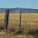 Views of Mt Arapilies by Jennifer Craker