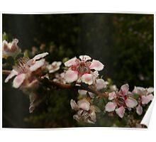 Otway Flowers 1 Poster