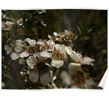 Otways Flower 2 Poster