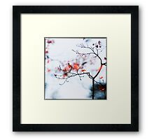 I see strawberries in the bokeh; Rikugien Park, Tokyo Framed Print