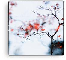 I see strawberries in the bokeh; Rikugien Park, Tokyo Canvas Print