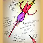 Fuchsia Jeane by Hanzibob