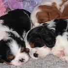 Three Sleepy Puppies by Jenny Brice