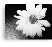black flower 6 Canvas Print