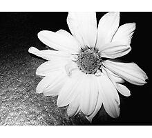 black flower 6 Photographic Print