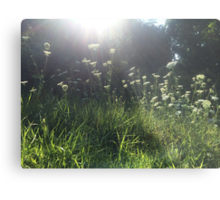 Sunlight Taking Baby's Breath Metal Print