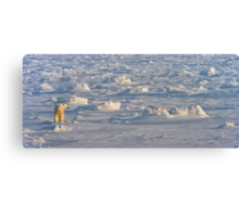 Between sea and ice Canvas Print