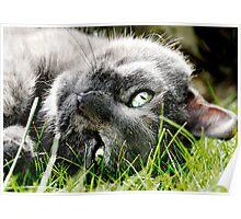 Sun Kissed cat Poster