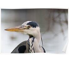 the Blue heron Poster