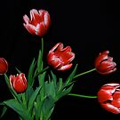 The Life Of A Tulip by Pamela Hubbard