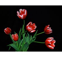 Family of Tulips Photographic Print