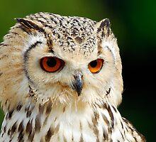 Eagle Owl by Owen Burke