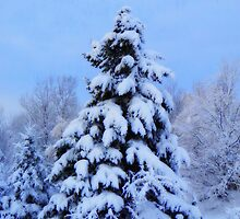 Winter Wonderland by Kathleen   Sartoris