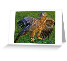 Falconry Greeting Card