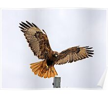Full Wingspan Poster