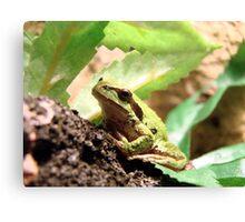 Green Frogger Canvas Print