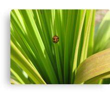 Ladybug Lair Canvas Print