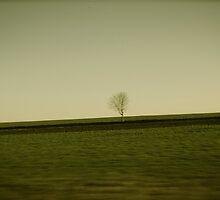 Arbre seul by Dan MacLean