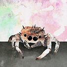 The cutest spider in the world by Kitty Rispens