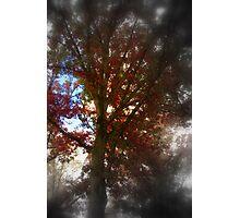 Fall Succumbs to Shadows Photographic Print