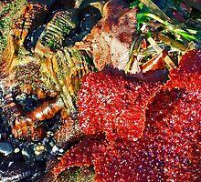 Beach Textures 1 by Tamara Valjean