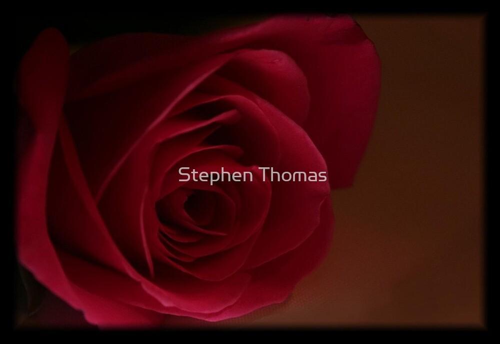 Dark Rose by Stephen Thomas