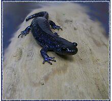 Salutations, Salamander! Photographic Print