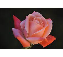 rosi rosa Photographic Print