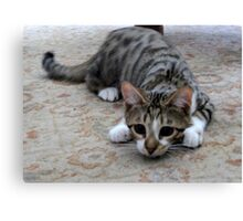 Monty the lively Cat  Canvas Print