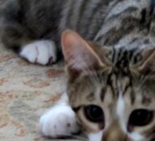 Monty the lively Cat  Sticker