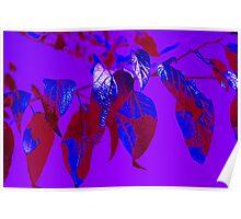 I Leaves For Blue Poster