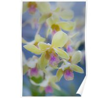 Orchids... Poster