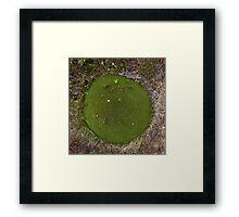 Little Field Framed Print