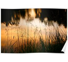 Grasses at Willow Pond Poster