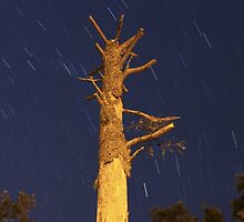 Shaved Tree and Star Trails by dezhdez