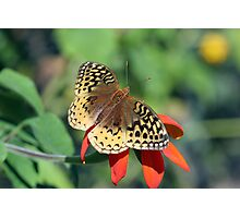 Great-Spangled Fritillary Photographic Print