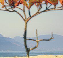 Brazilian Beach Tree Sticker