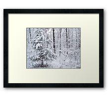 Snowy Forest Wonderland Framed Print