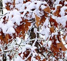 December Leaves by NatureGreeting Cards ©ccwri