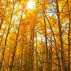 Trees of Aspen by Dave Mortell