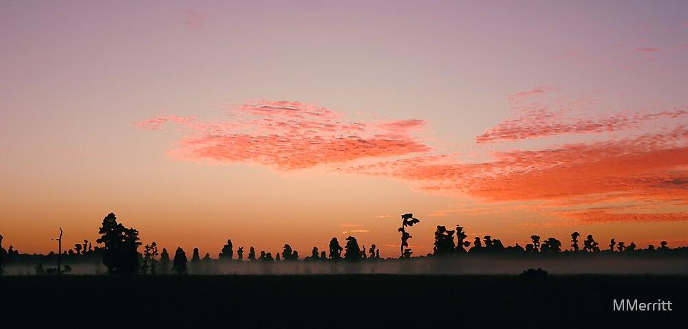Florida Wilderness Sunrise by MMerritt