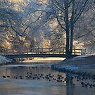 A little bridge in hoarfrost wonderland by jchanders