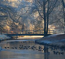 A little bridge in hoarfrost wonderland by jchanders