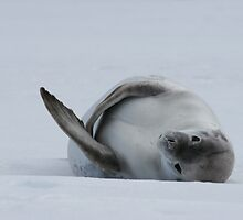Seal by squires