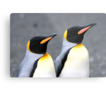 Penguin duo 1 Metal Print
