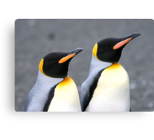 Penguin duo 1 Canvas Print