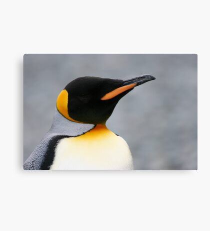 Solo penguin Canvas Print