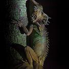 boyd's forest dragon by col hellmuth