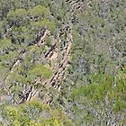 Alum Cliffs, Alum Cliffs Reserve, Mole Creek, Tasmania by Margaret  Hyde